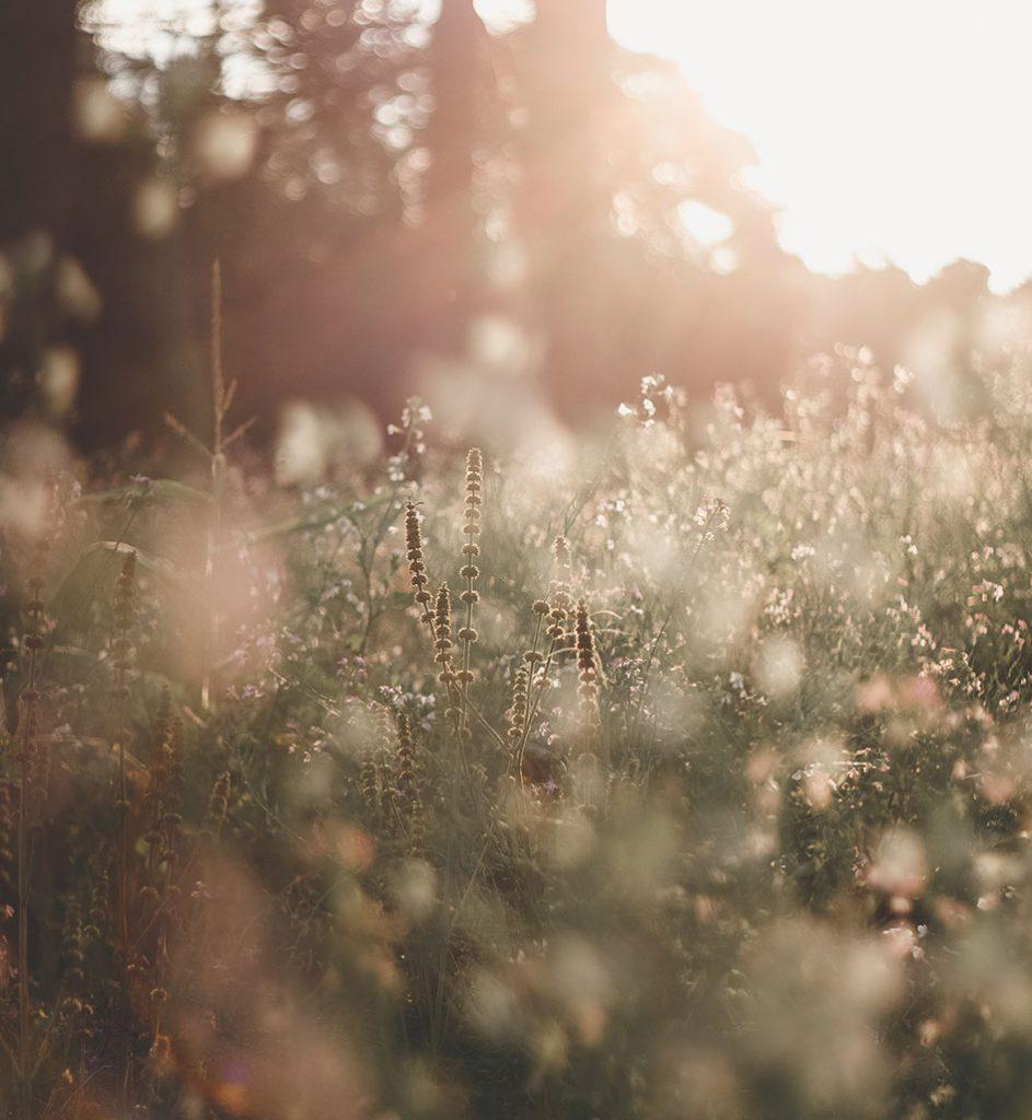 Natuurlijke gezondheid. Wilde bloemen.